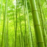 FTC Fines Retailers $1.3M For Bamboo Labeling